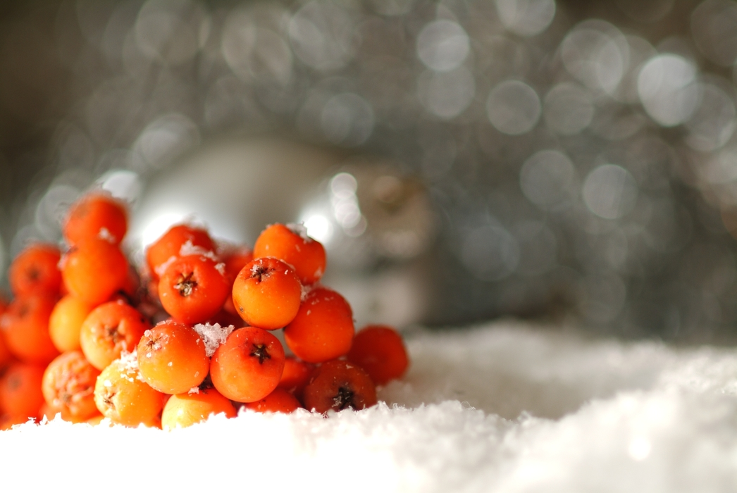 Christmas Ornaments: Red Berries in the Snow
