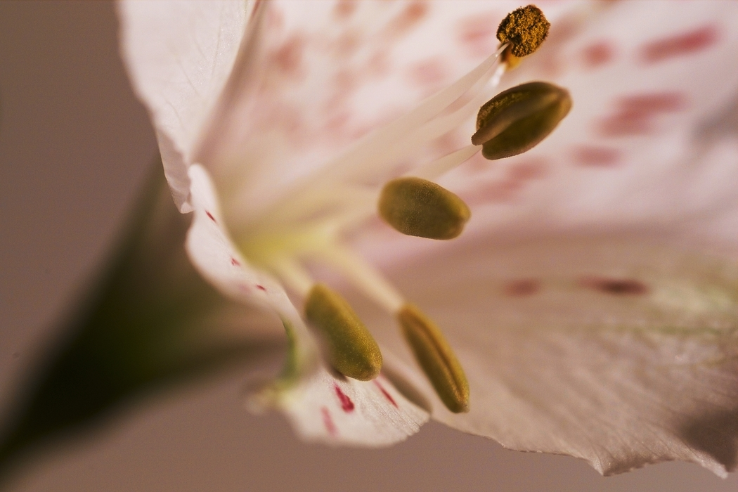 Flower Blossom Stamen Anthers and Filaments