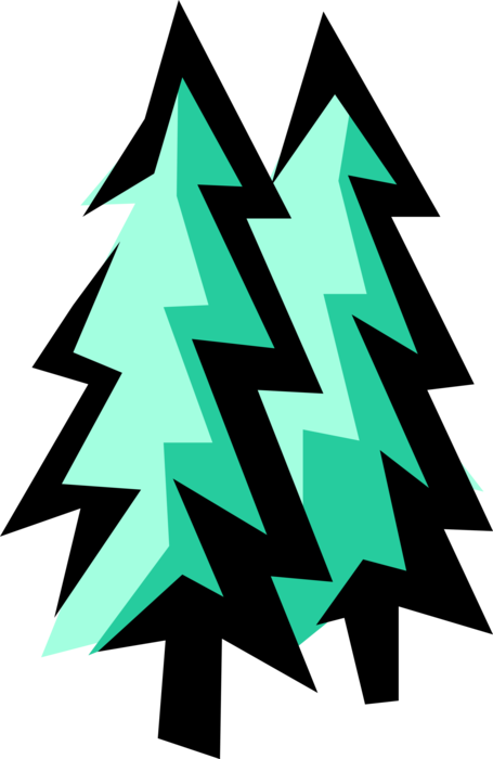 Vector Illustration of Coniferous Evergreen Fir Trees