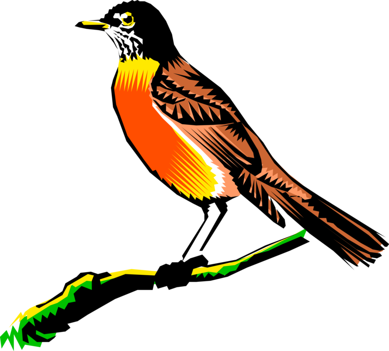 Vector Illustration of American Migratory Songbird Robin Bird on Tree Branch