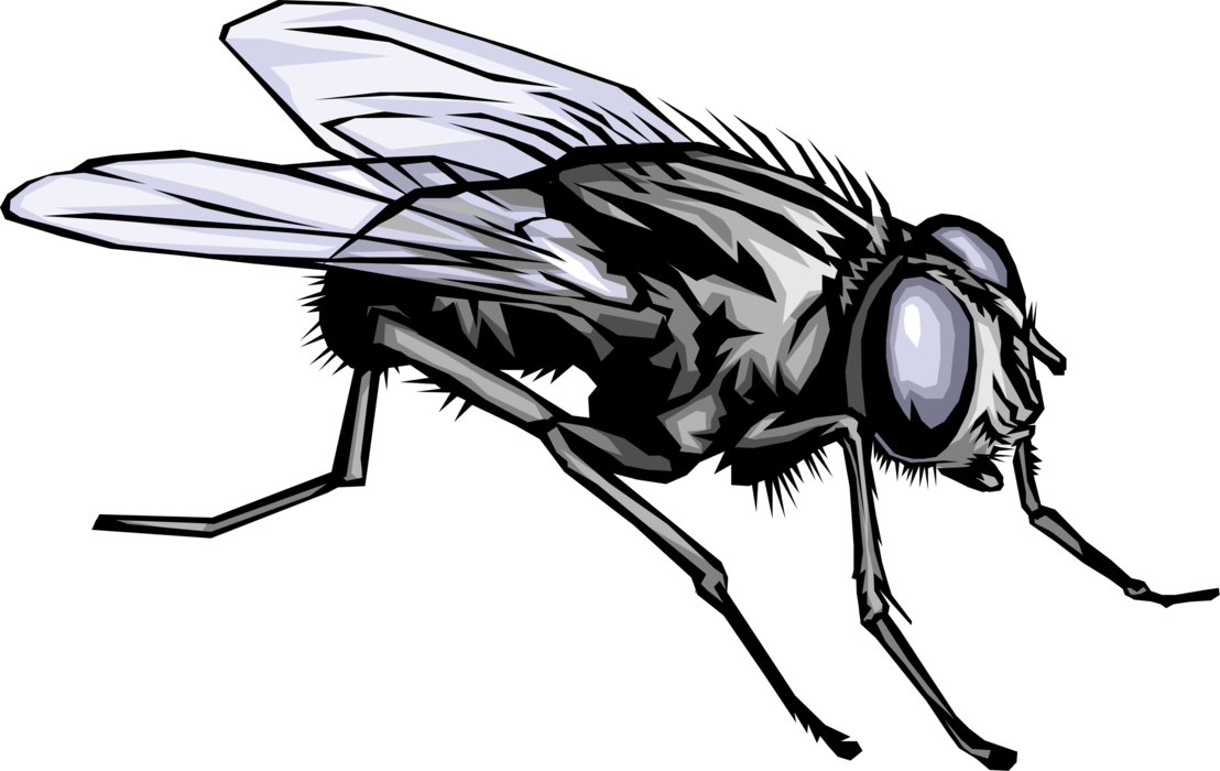 Vector Illustration of Housefly Insect Fly Bug at Rest