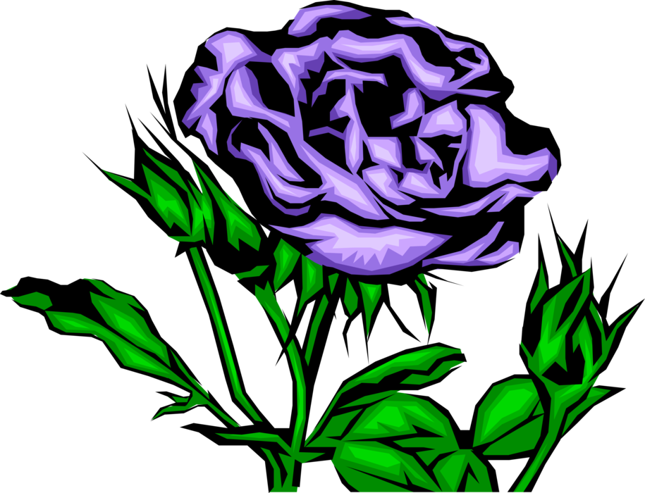 Vector Illustration of Purple Rose Flower