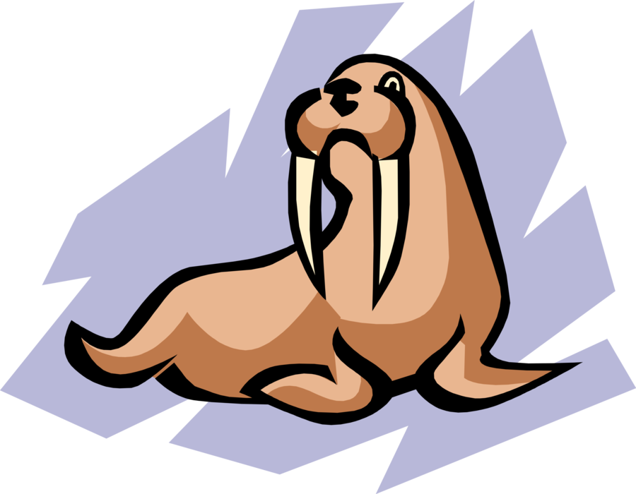 Vector Illustration of Flippered Marine Mammal Walrus