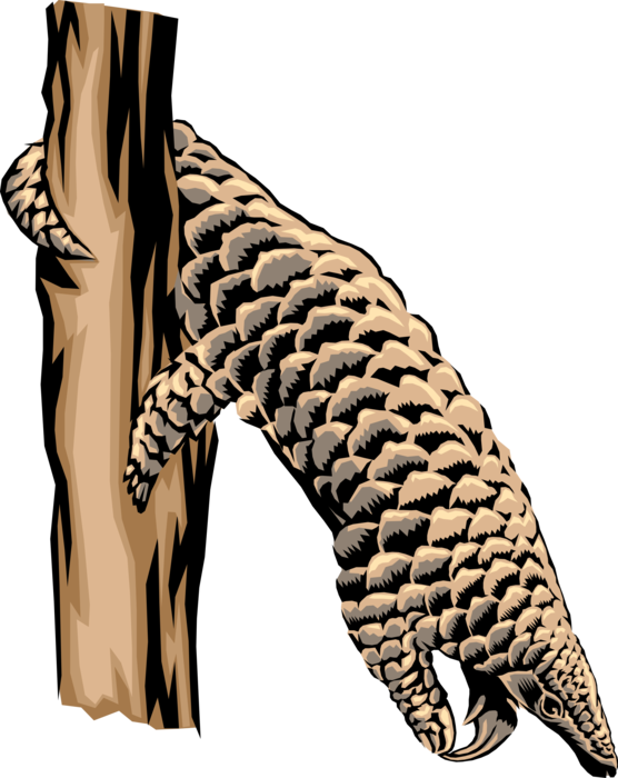 Vector Illustration of Equatorial Africa Insect-Seeking Tree Pangolin