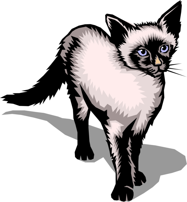 Vector Illustration of Family Pet Small Domesticated Carnivore Siamese Cat