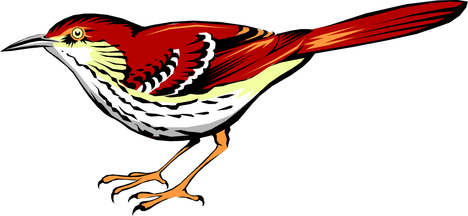 Vector Illustration of Bright Reddish-Brown Thrasher Bird