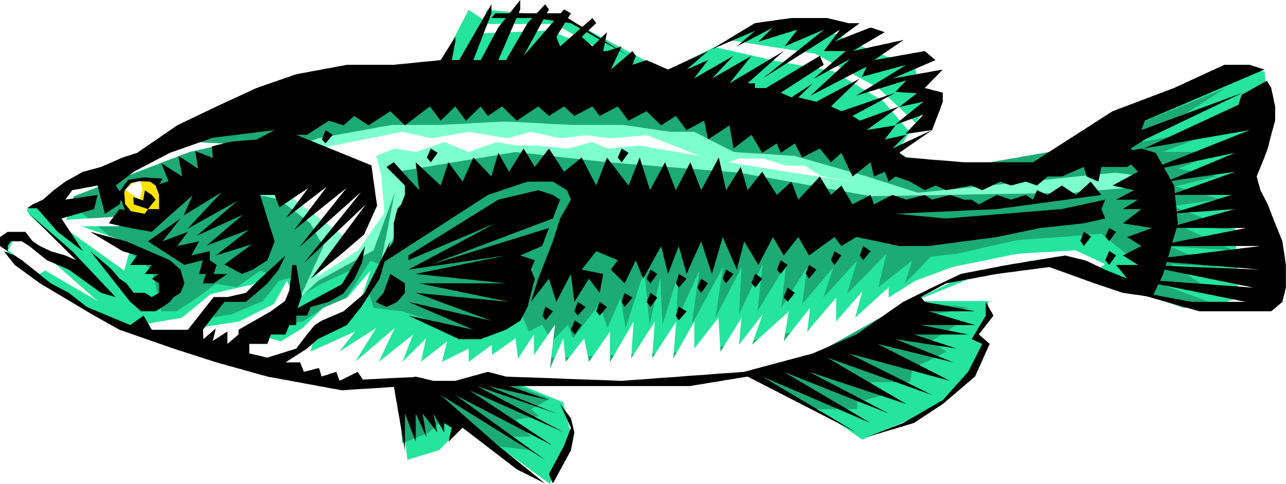 Vector Illustration of Freshwater Gamefish Largemouth Bass Fish