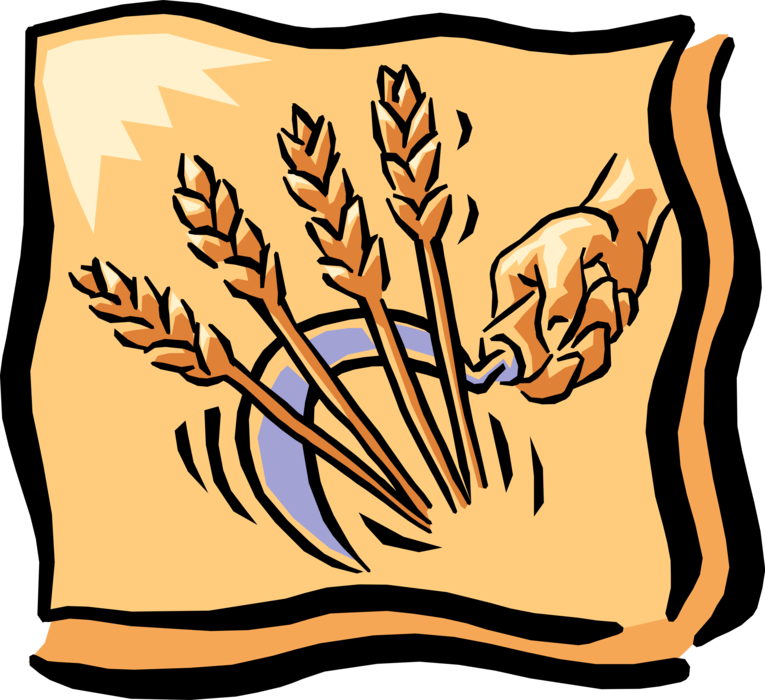 Vector Illustration of Hand with Sickle Harvests Wheat Grain of Cereal Grass