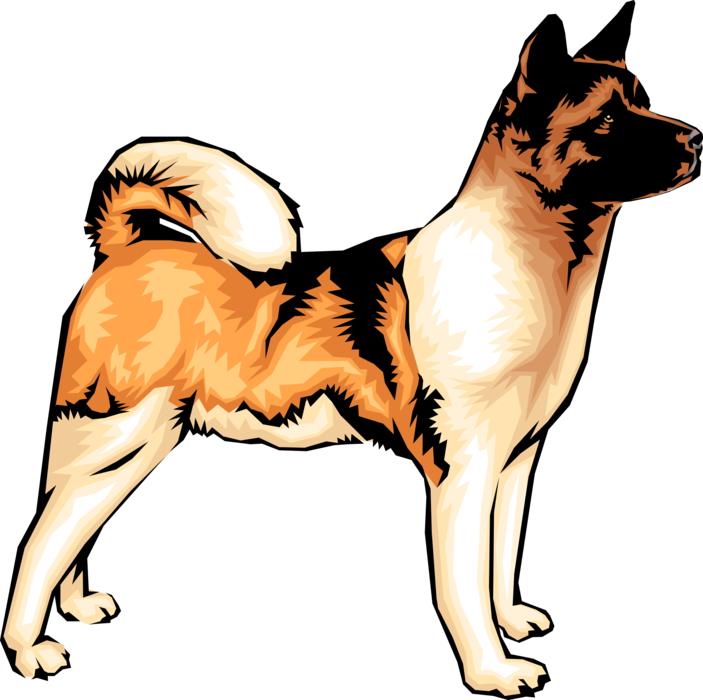 Vector Illustration of Akita Dog Stands Alert