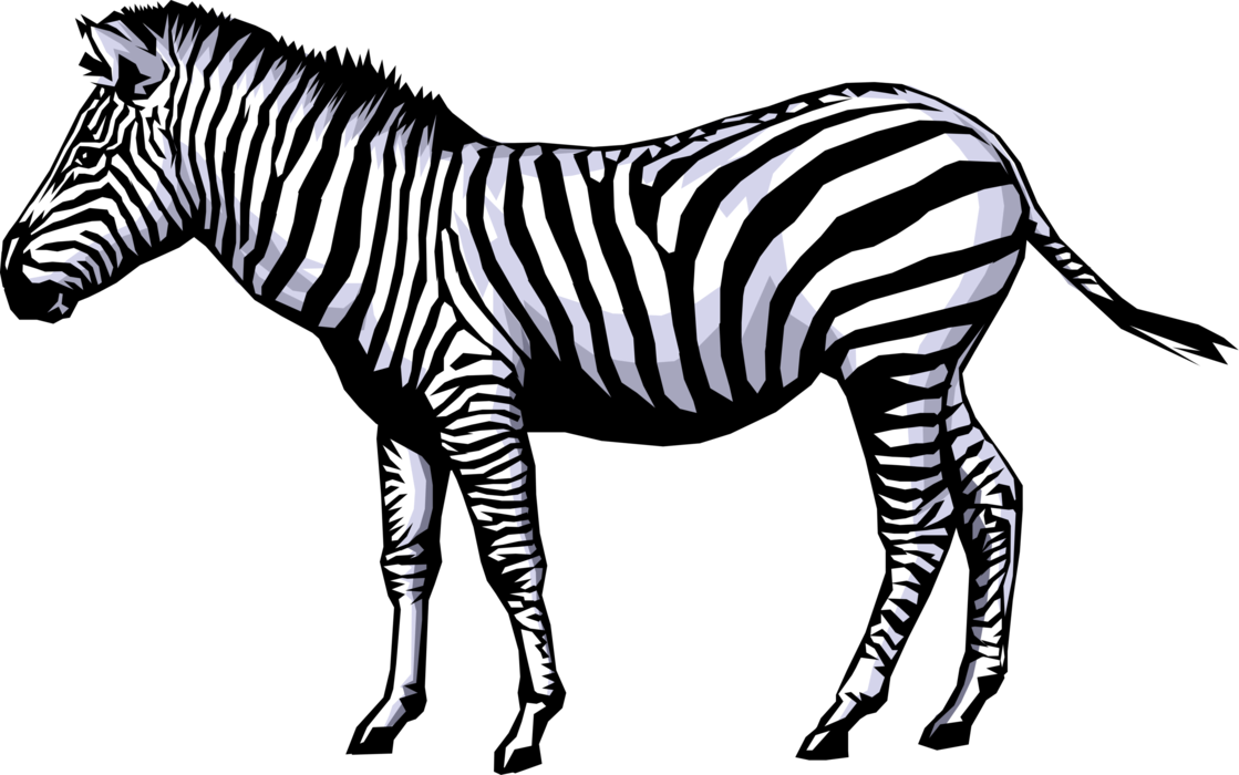 Vector Illustration of Striped African Equid Zebra Horse