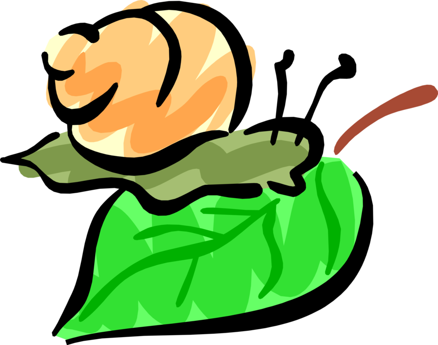 Vector Illustration of Snail or Terrestrial Gastropod Mollusk