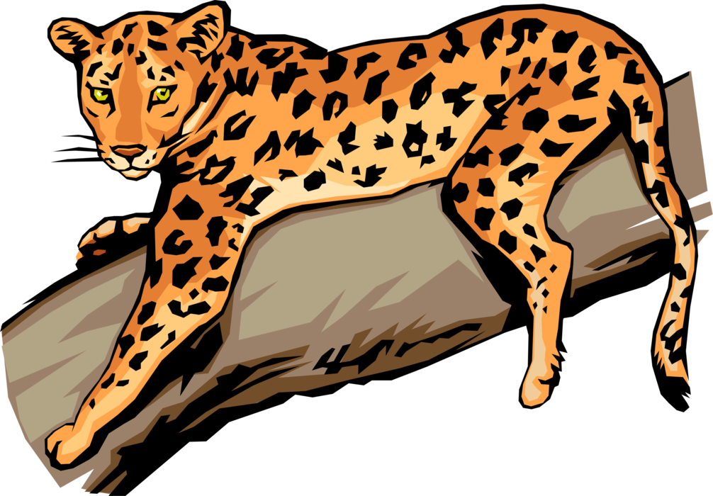 Vector Illustration of Large African Carnivore Leopard on Tree Branch