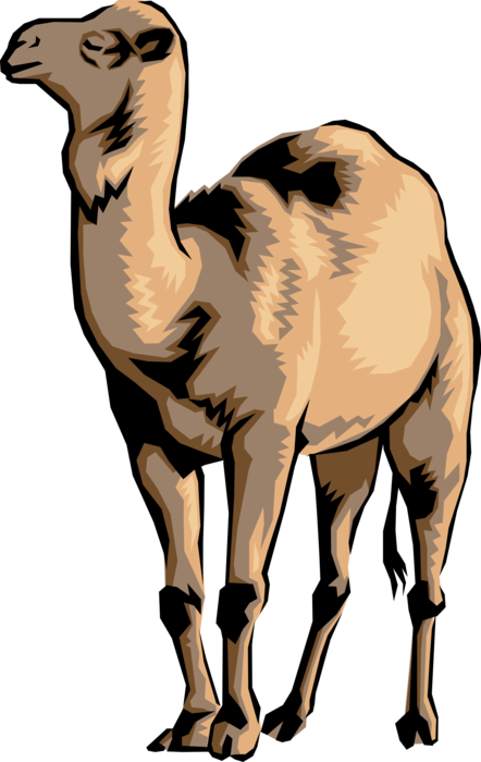 Vector Illustration of One-Humped Dromedary Beast of Burden Camel