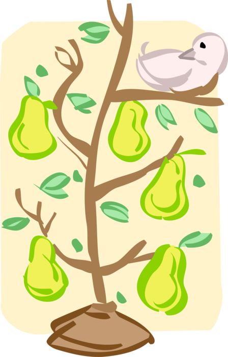 Vector Illustration of Partridge in Pear Tree at Christmas