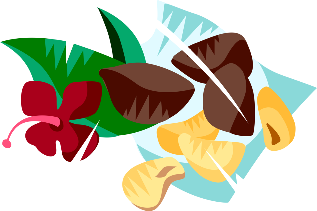 Vector Illustration of Brazil Nuts Hard-Shelled Edible Seed