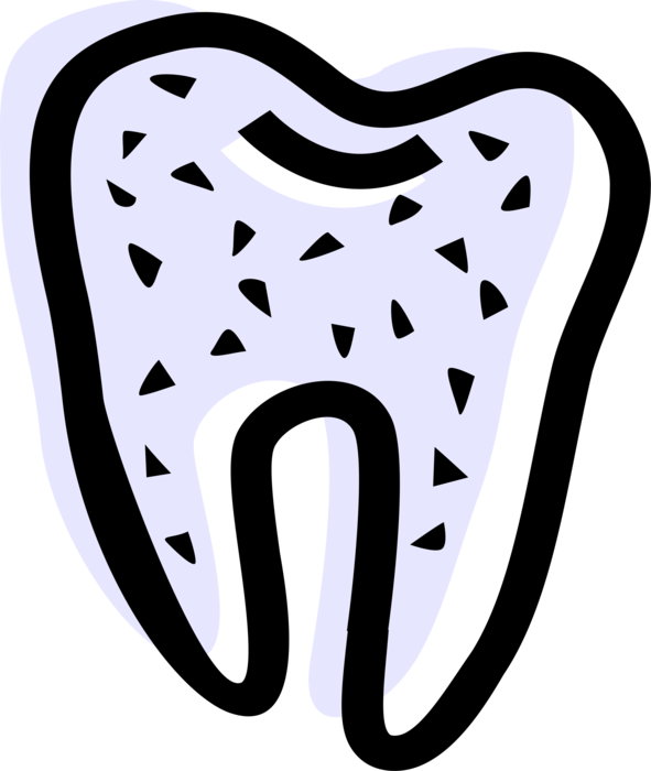 Vector Illustration of Human Dental Molar Tooth with Roots