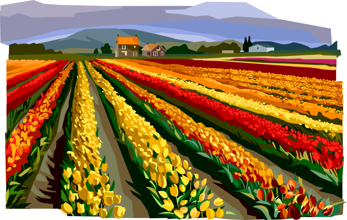 Vector Illustration of Fields of Flowers, Netherlands, Holland